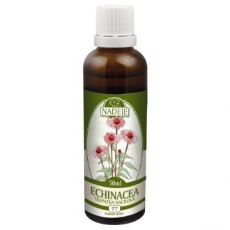 Echinacea - výtažek z byliny