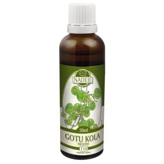 Gotu-kola (Brahmí) - výtažek z byliny