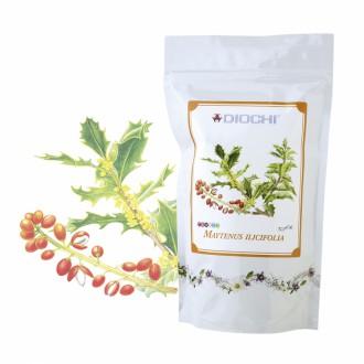 Maytenus ilicifolia - čaj